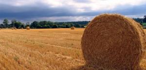 Feed & Grain